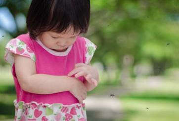 Các loại côn trùng gây hại cho sức khỏe
