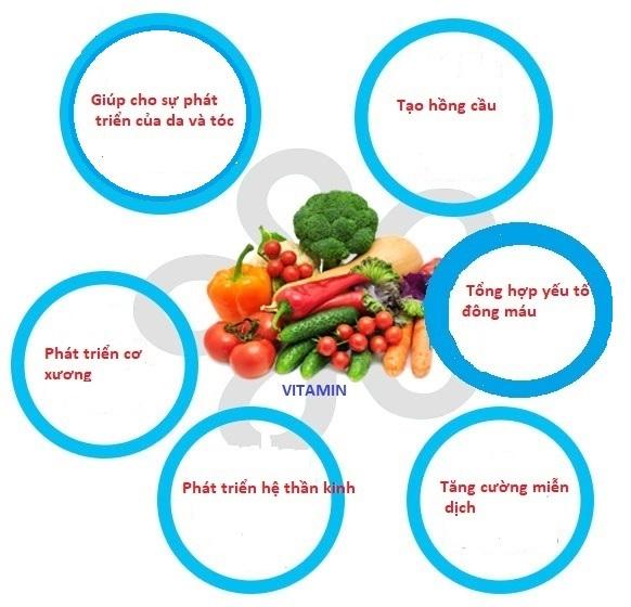 Vai trò của vitamin với cơ thể